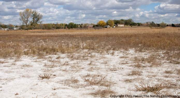 Salt Stress and its impact on crop productivity in Pakistan