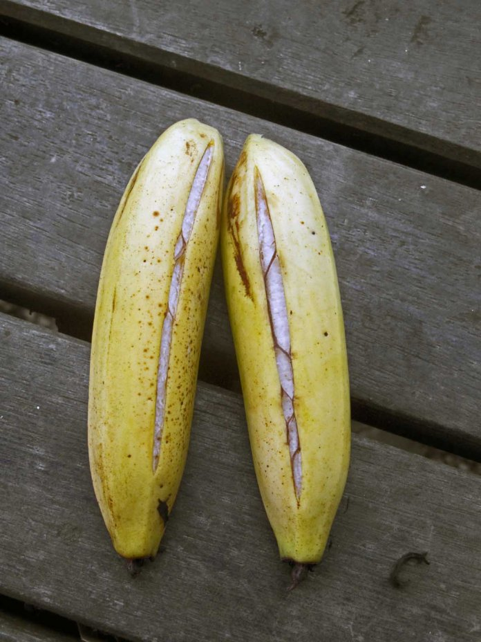 Physiological disorders in Banana