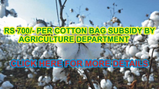 Punjab Government to provide subsidy on cotton seed