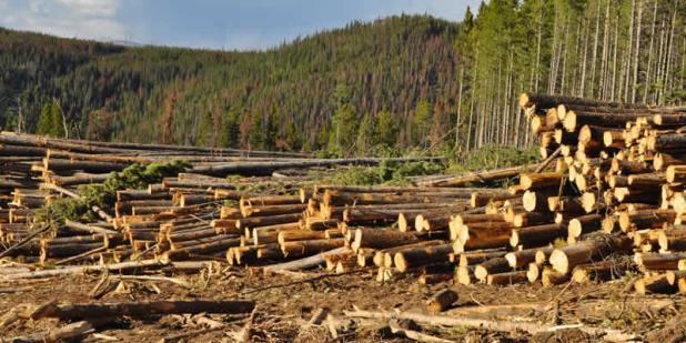 Strategies-to-reduce-deforestation-1