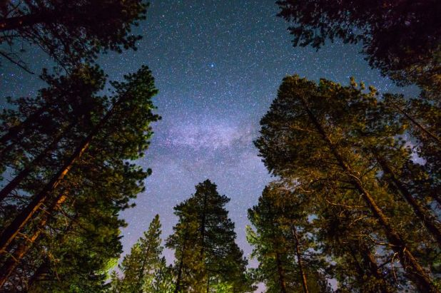 redwood-trees-lake-tahoe-night-sky.jpg.838x0_q80