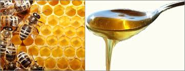 Producing-and-Selling-Honey