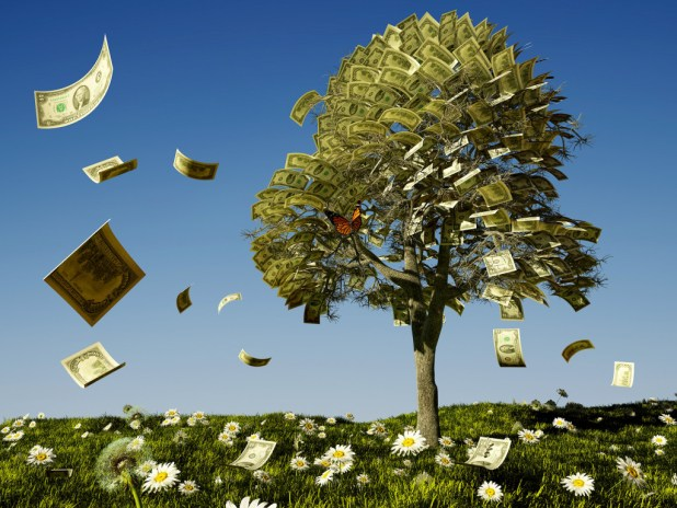Growing-Money-Mainting-Trees-and-selling-them