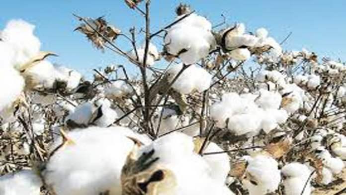 Cotton prices under pressure