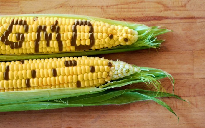 GM Maize: A Golden Product