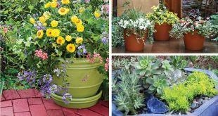 Container-Gardening-by-saad-ur-rehman
