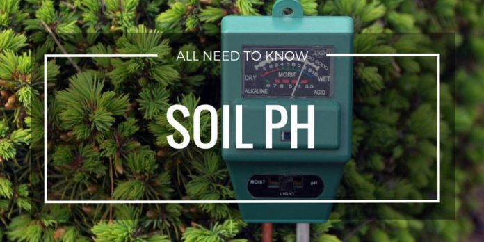 All about Soil pH; its importance, need, how to test it and how to balance it