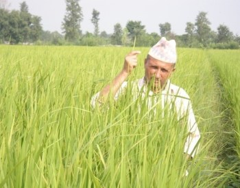 Gobinda in his SRI field