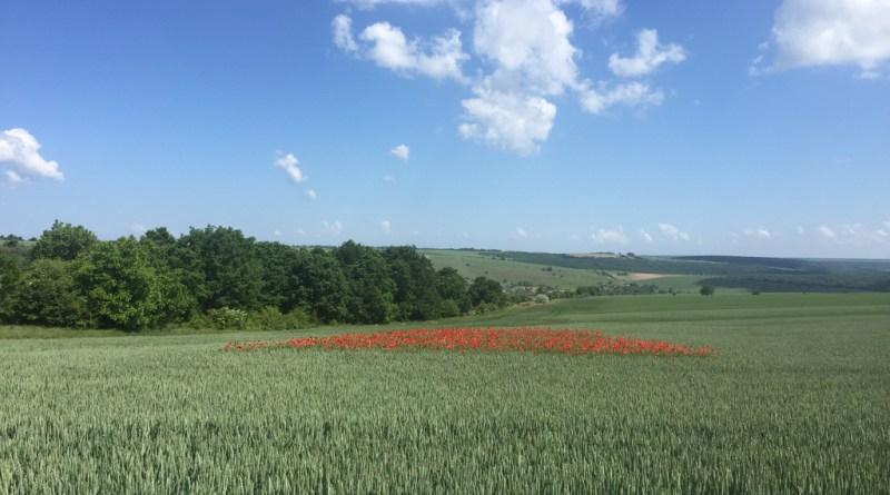 контрол на плевелите в пшеница