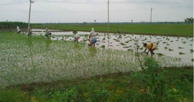 Rice Intensification (SRI) and Climate Change Mitigation