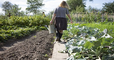 Organic Gardening – No Tilling Needed Gardening Method