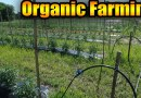 Organic farming guide
