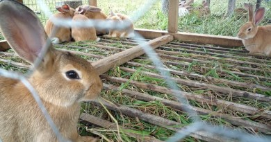 Rabbit farming is an emerging but profitable business