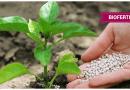 Biofertilizers use for raising output