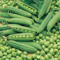Mattar (Green)
