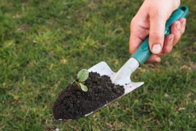 trowel gardening tools