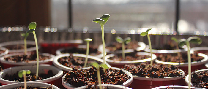 Best ways to grow plants from seed: Seeds Germination Guide