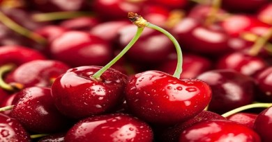 South Australian cherries finish summer harvest strongly after challenging growing season