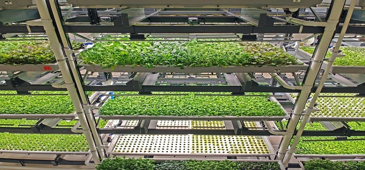 Vertical Farming – Indoor Agriculture
