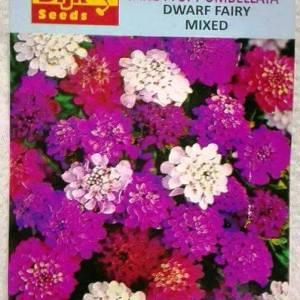 Winter flower seeds in Pakistan