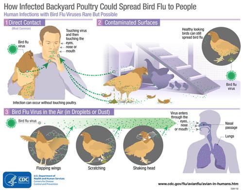Guidelines for Avian Influenza Disease (Bird flu)