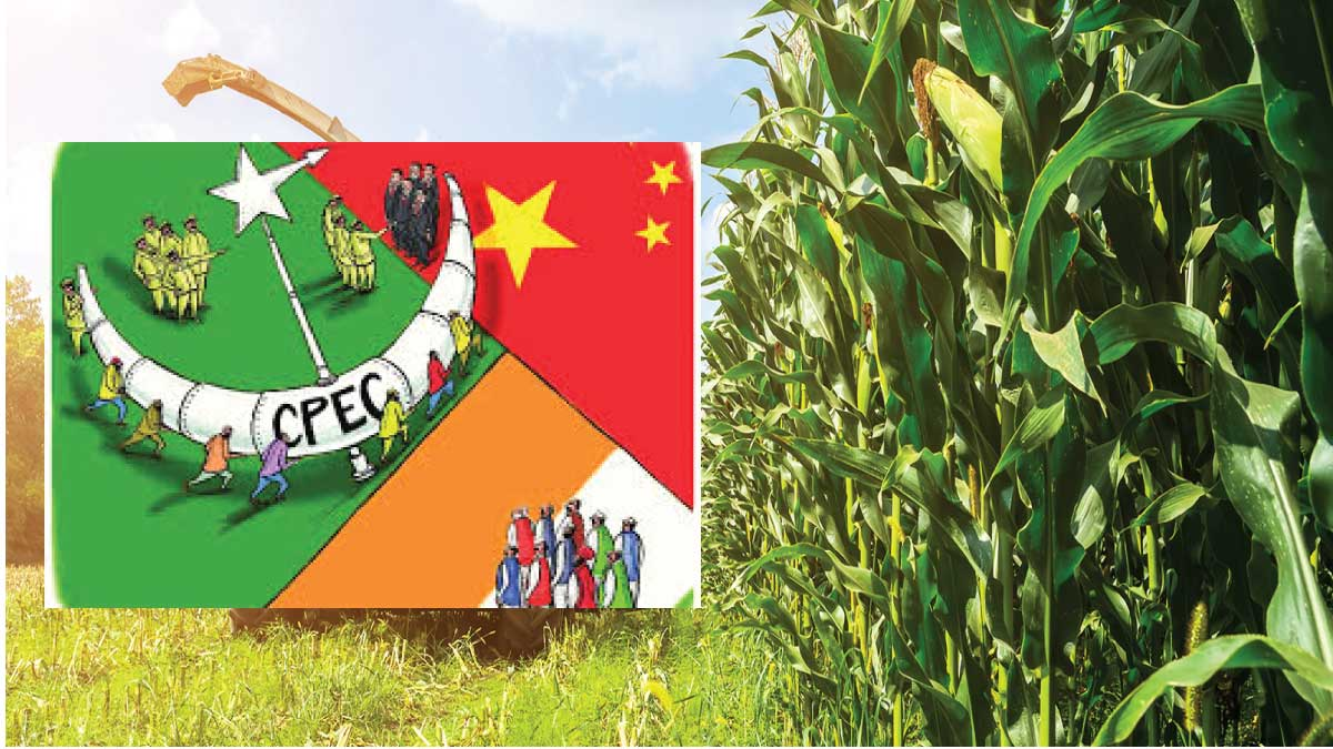 China opens its market to Pakistani agricultural products