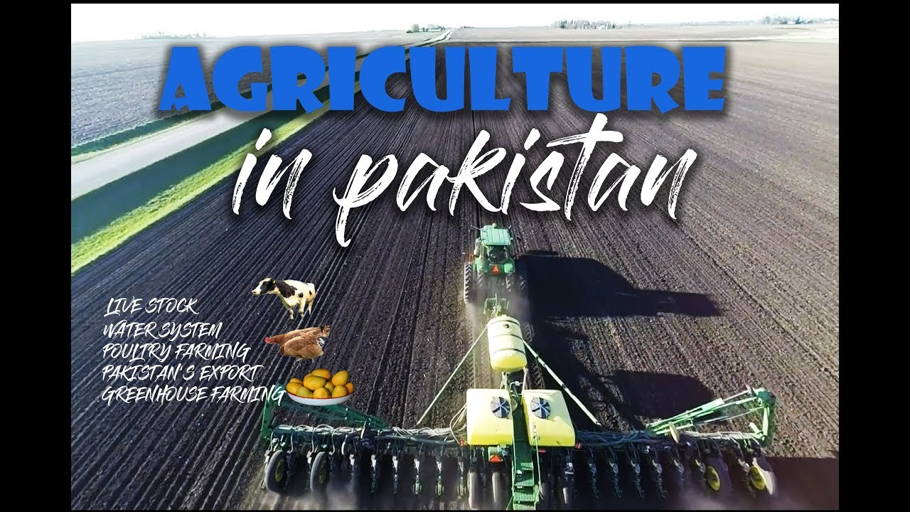 Agriculture fears in Pakistan