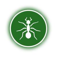 Ameisen und Schaben