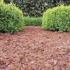 TOPBUXUS Carpet (70 L)