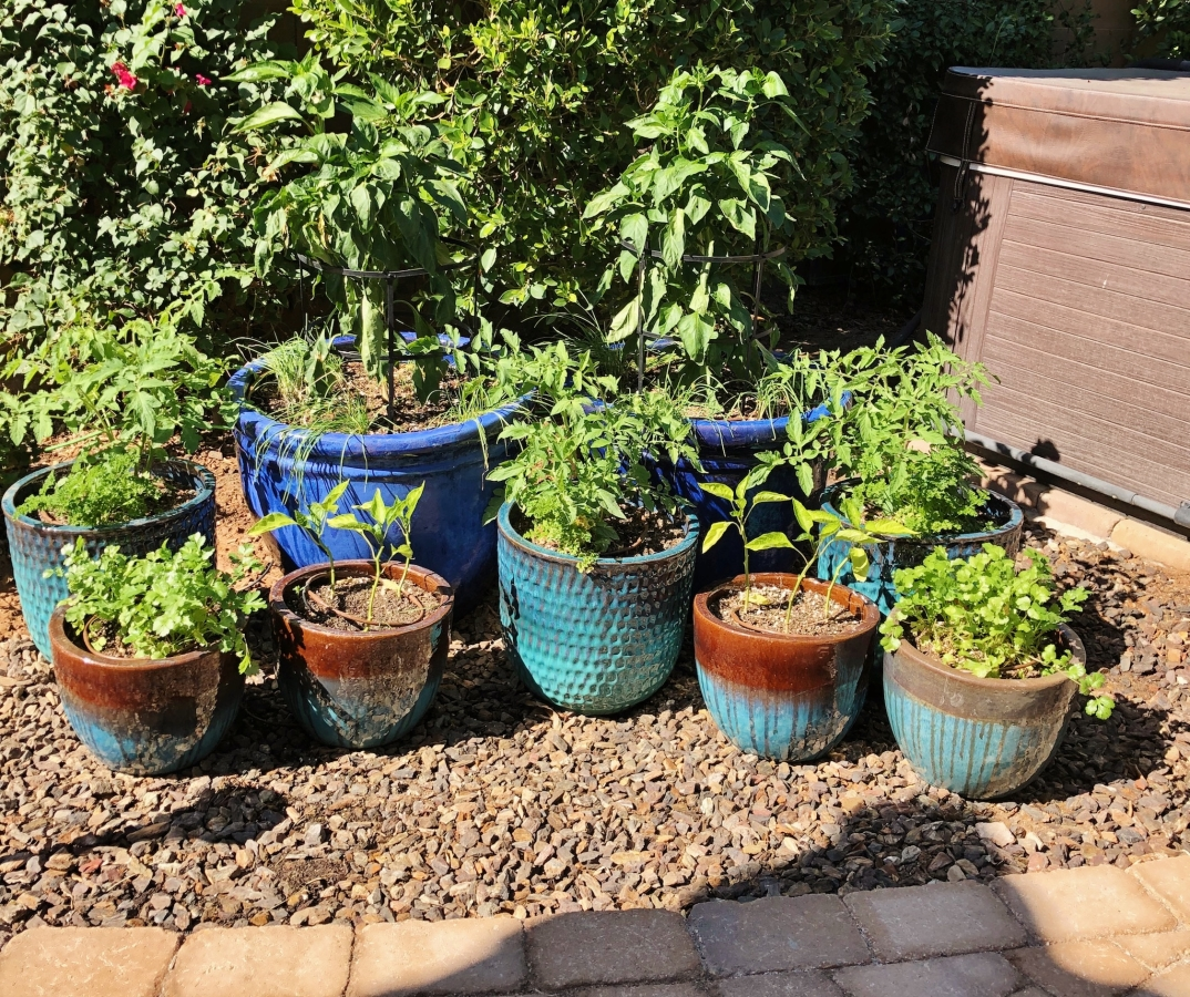 perfect plants for patio gardening