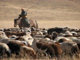 Mongolia 2011 © Agriversal Ltd