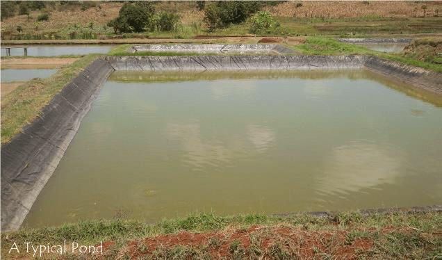 A Typical Fish Pond