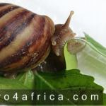Essential-food-for-snails