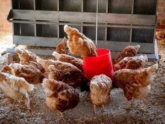reasons-many-agribusinesses-fail