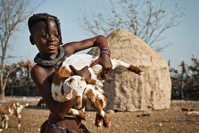 take care of goats goat farming business
