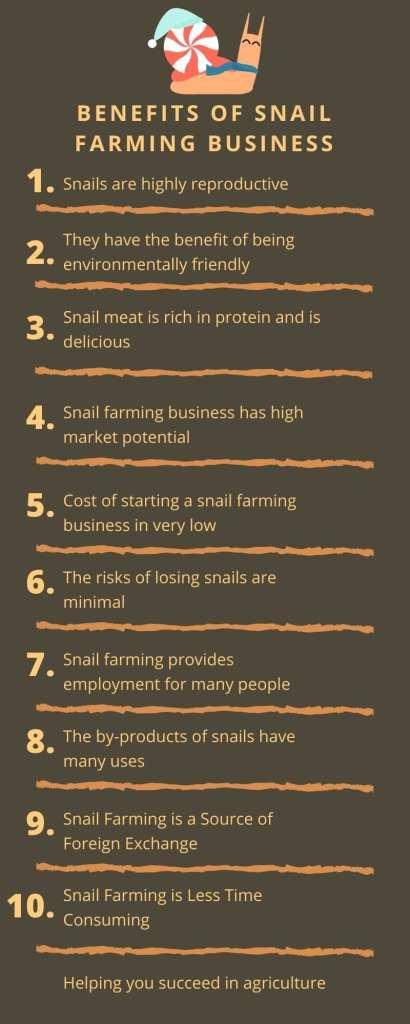 Benefits-of-snail-farming-infographics