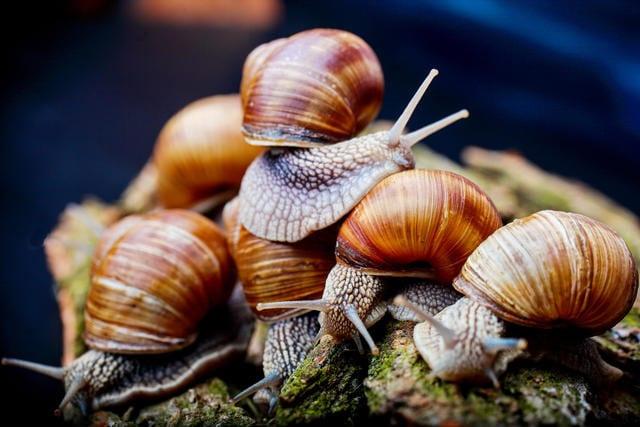 advantages of snail farming business