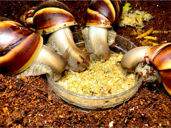 take out leftover snail food to get rid of ants and pest