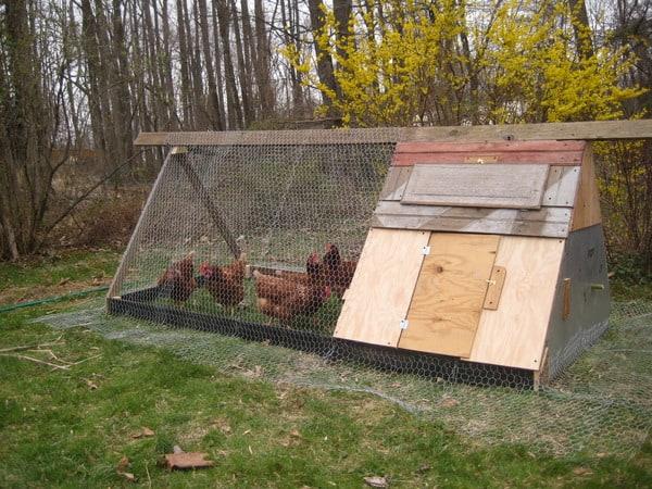 a-folding-unit-poultry-house