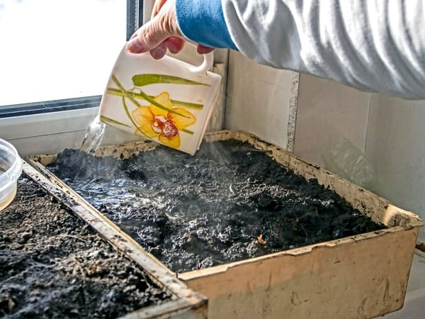 Sterilizing-the-soil-for-snail-farming-with-boiling-water