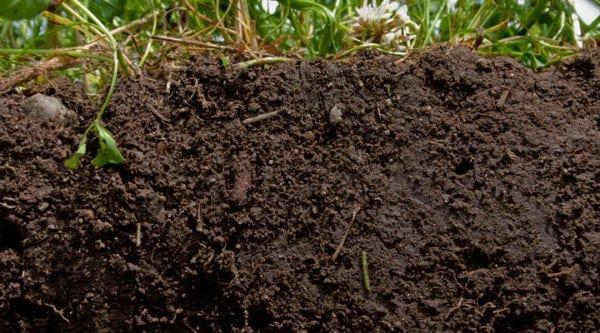 characteristics-of-Loam-soil-for-snail-farming