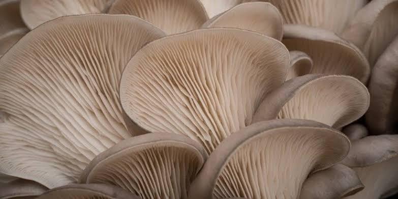 Profitable mushroom production business