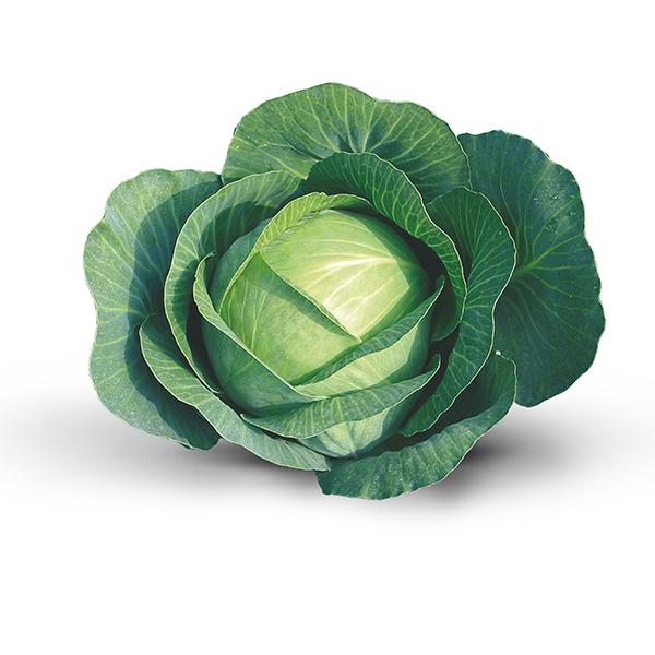 kupus karfiol brokoli seminis