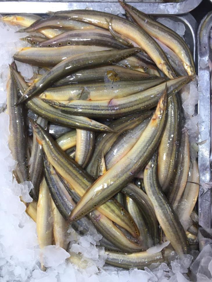 তারা বাইম মাছ