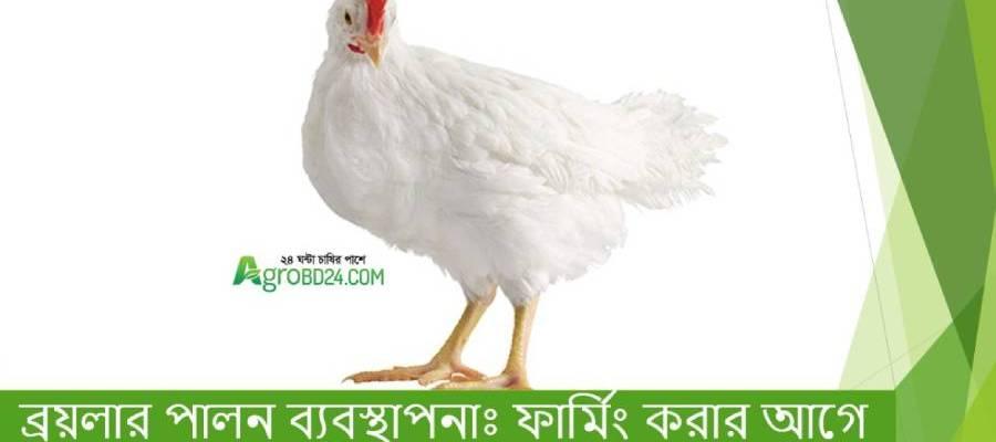 Broiler Chicken Farming