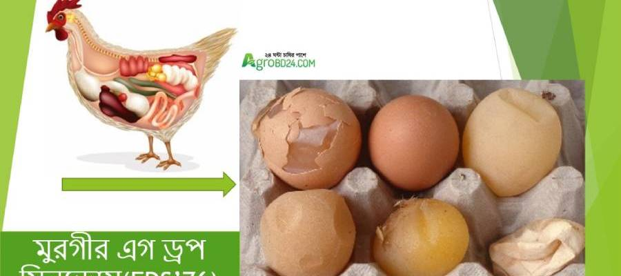 egg drop syndrome poultry