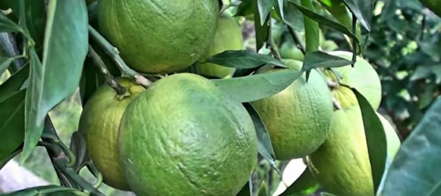 Malta cultivation for success