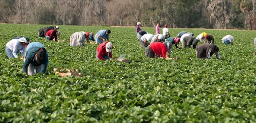 Gobierno reparte 236 millones de euros para contratar trabajadores del campo