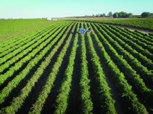 El precio medio de la tierra agrícola española bajó 30 euros/hectárea