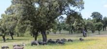 Resultado de imagen de AGRARIA ANIMALES ANDALUCIA
